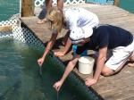 Feeding Fish on Isla Morada